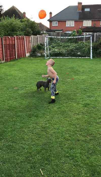 Dog And Shirtless Kid Play With Balloon in Garden