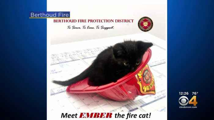 Berthoud Fire Department Introduces 'Ember The Fire Cat'