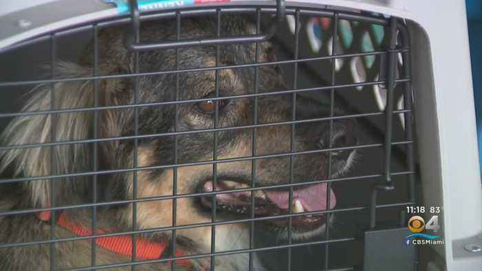 Dogs, Cats Rescued From Bahamas Now Looking For Forever Homes In Florida