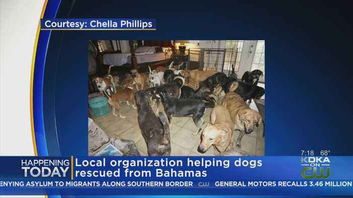 PAART Rescues More Dogs From Bahamas