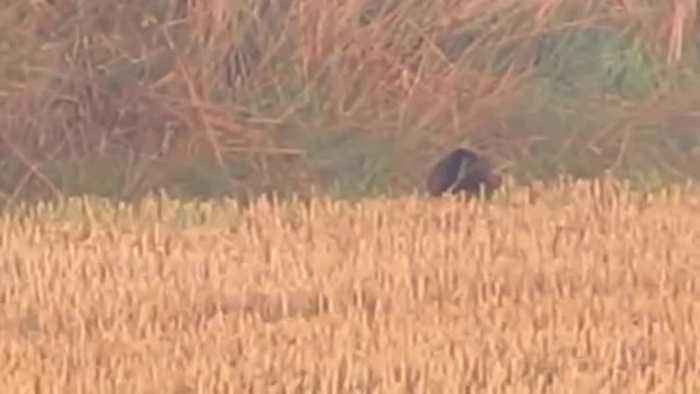 Couple claim to have spotted the FEN TIGER