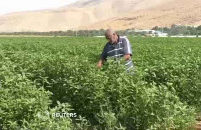 Palestinians vow to keep Jordan Valley land