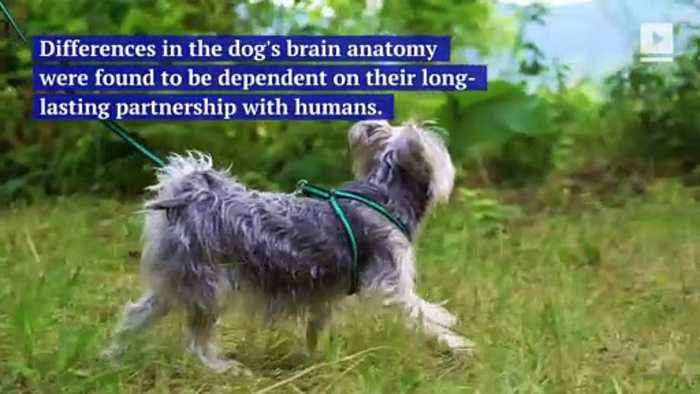 Different Dog Breeds Have Different Brains, Study Finds