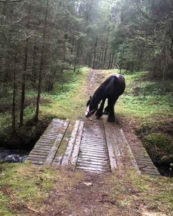 Horse decides to find 'better' way to cross stream