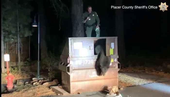 Police officer rescues bear trapped in dumpster