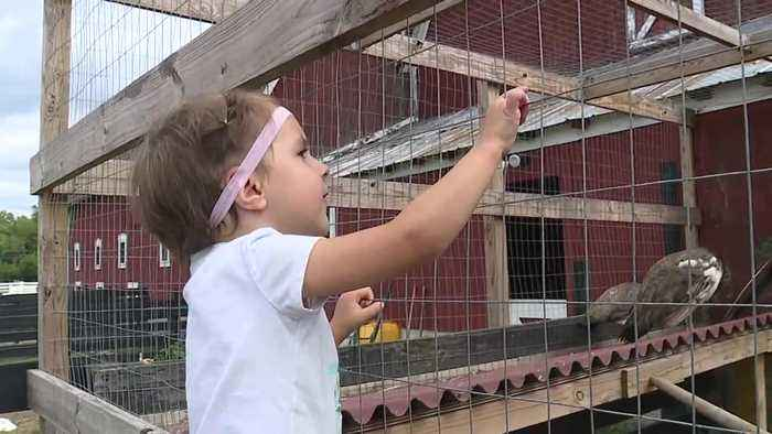 Maybury Farm in Northville  is a working farm for all generations to enjoy