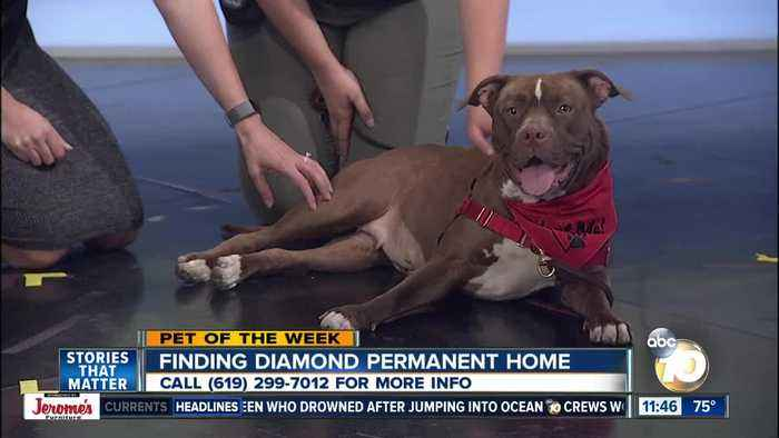 Pet of the Week: Diamond