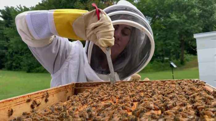 Veterans in the U.S. are turning to beekeeping to help ease mental health conditions