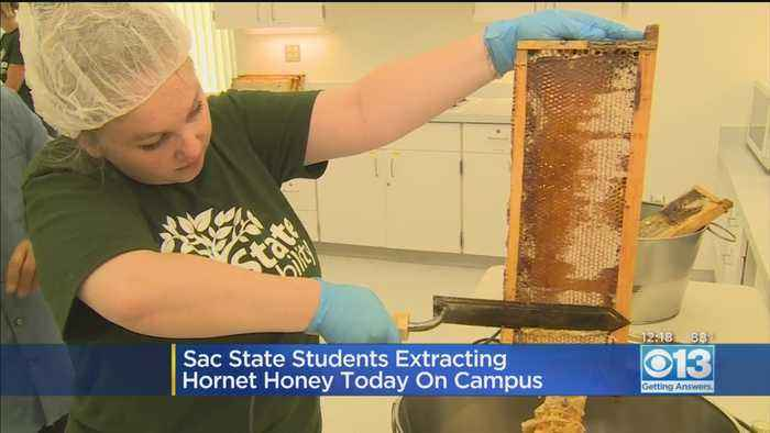 Hornet Honey: Sac State Students Extracting Honey