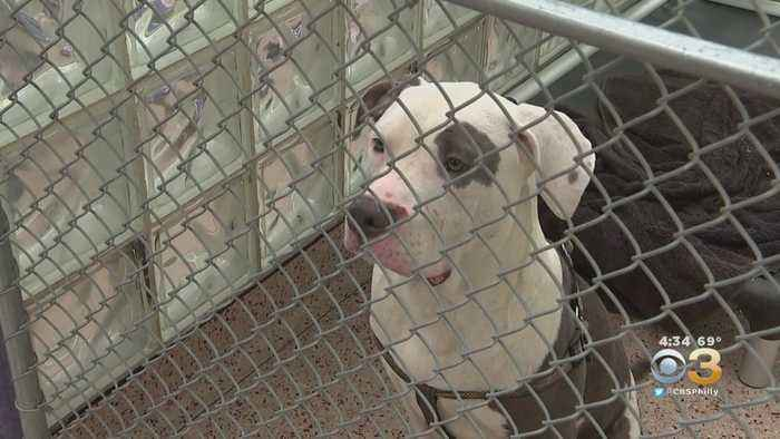 Animals Seized From Strawberry Mansion Home