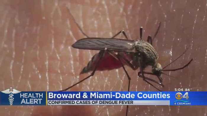 Dengue Cases In Miami-Dade, Broward