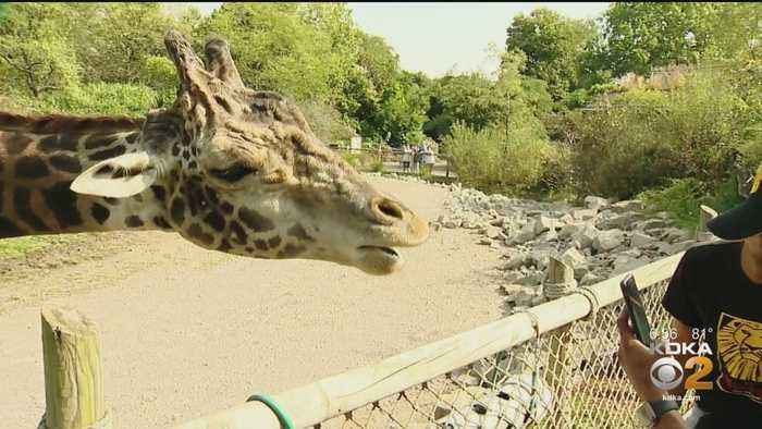 Lion King Broadway Cast Visit Giraffes At The Zoo
