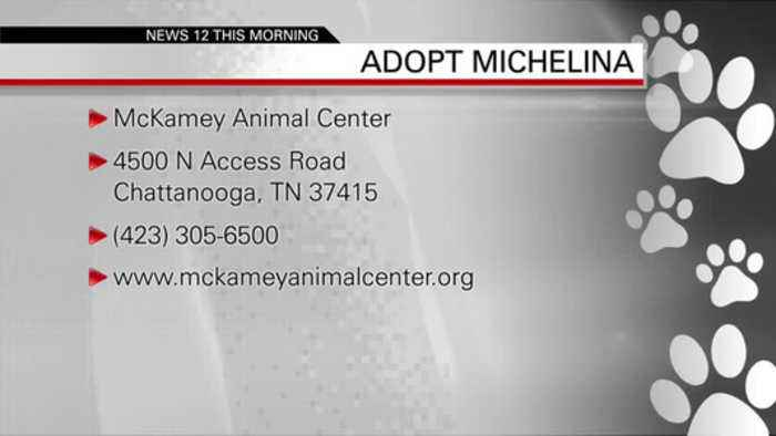 PET OF THE WEEK MICHELINA  09-13-19