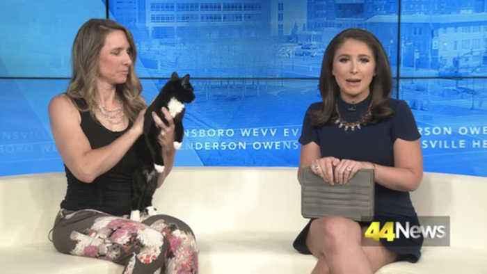 Furry Friend Friday: Ozzie the Kitten