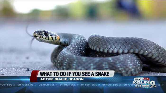 What you should do if you see a rattlesnake