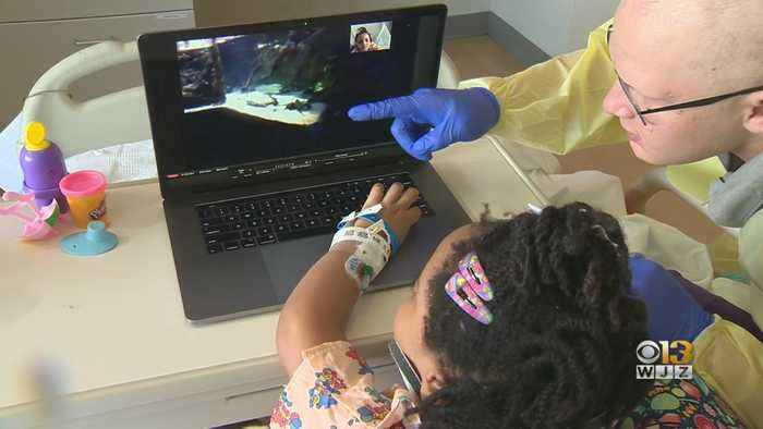 Project Enables Pediatric Patients To Virtually Visit, Explore Baltimore Aquarium And Local Museums