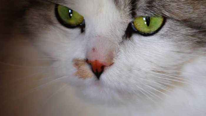 Here's Why You'd Have (Almost) Never Seen Cat Meow At Other Cats