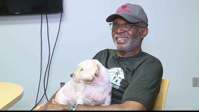 Shelter dogs used in New Theatre Restaurant's show