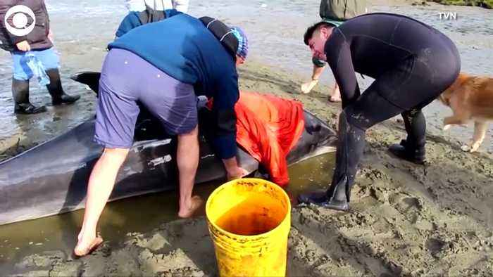 WEB EXTRA: Dolphins Rescued