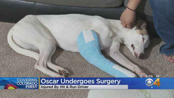 'Oscar' Gets Surgery Thanks To Donors