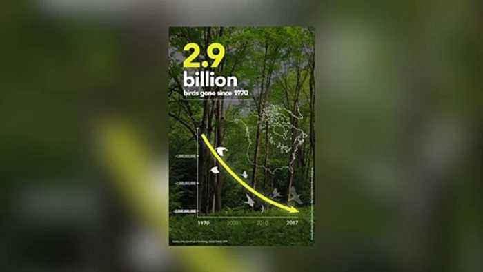 North America Lost 3 Billion Birds In 50 Years