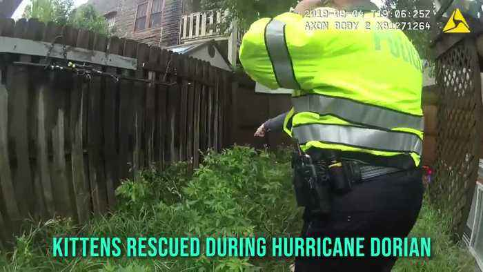 Police Officers rescue two kittens during Hurricane Dorian
