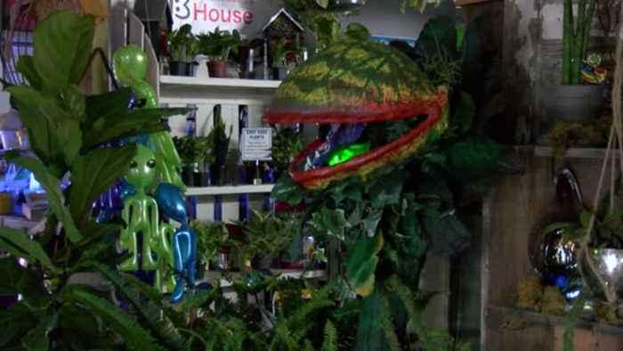 Area 51 Plant Sale