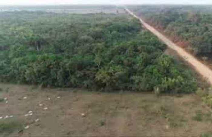 Bolsonaro-backed highway targets heart of Amazon