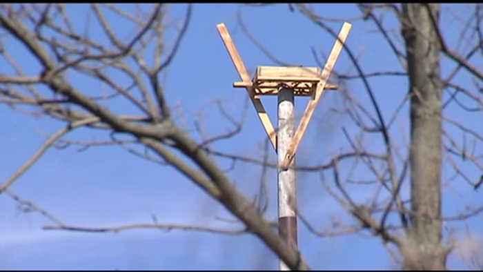 Osprey stands put up