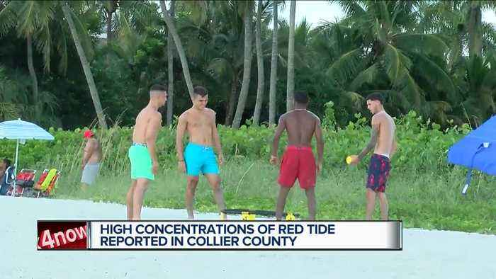 Neighbors react to elevated red tide levels in Collier County