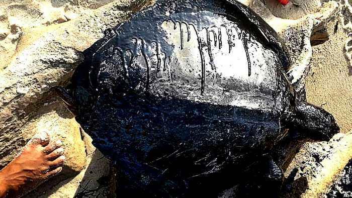 Brazil spill: President says oil is not Brazil's