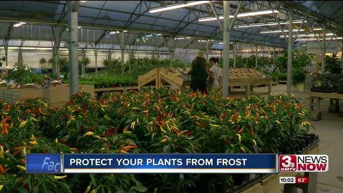 Protect your plants before freezing temps come this weekend