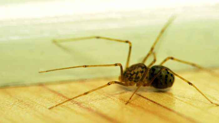 No, You're Not Swallowing 8 Spiders a Year (and Other Sleep Myths Busted)