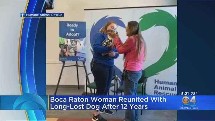 Dog Reunited With Owner 12 Years Later