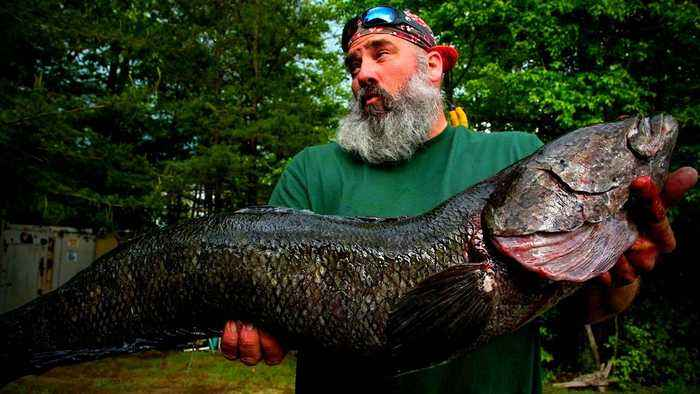 True facts about the Northern Snakehead Fish