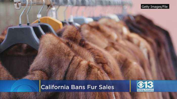 California Bans Fur Sales, Circus Animal Use