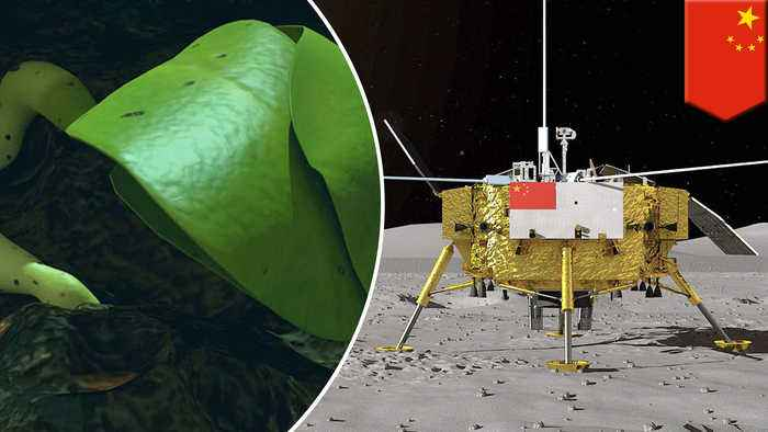 China grows cotton plant on the moon in biological first