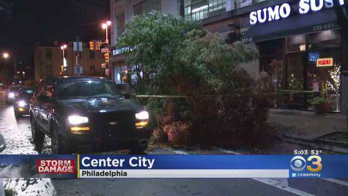 Drenching Rain, Whipping Winds Bring Down Tree In Center City