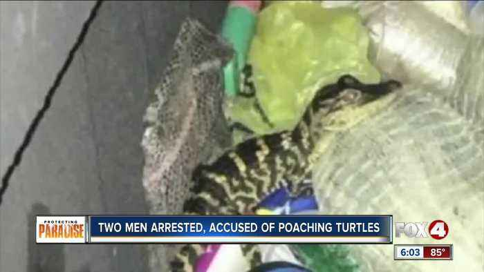 Two men arrested, accused of poaching thousands of turtles