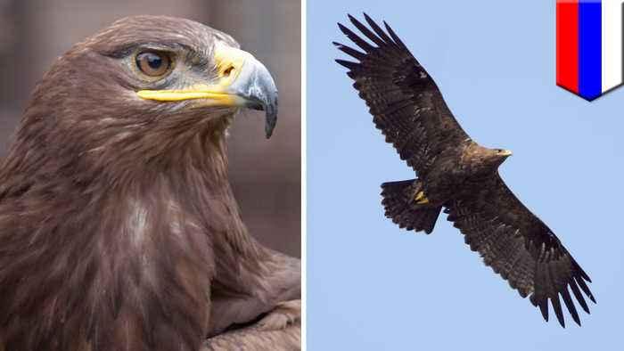 Migrating Russian eagle racks up eye-popping data roaming bill
