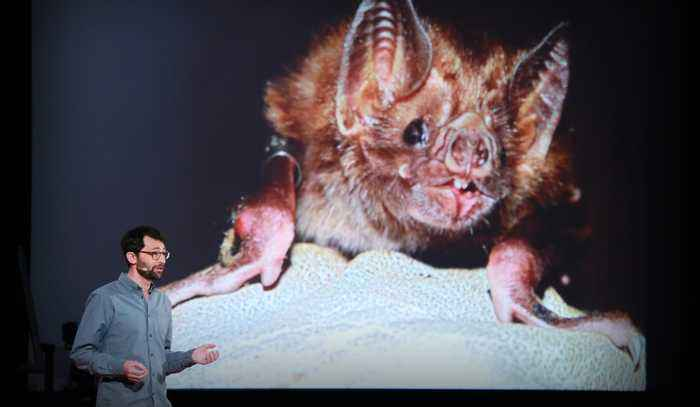 What vaccinating vampire bats can teach us about pandemics   Daniel Streicker
