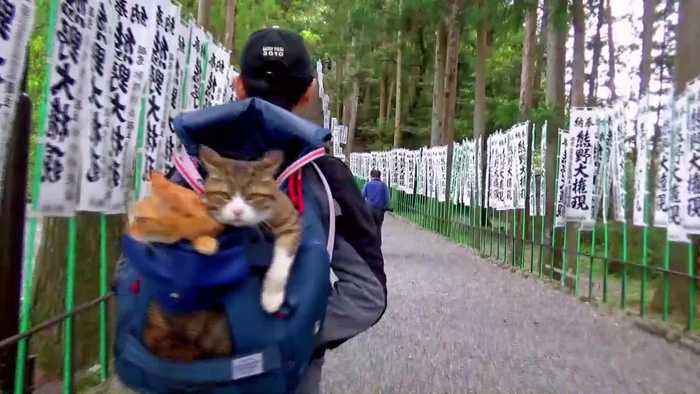 These adorable pictures show the real Hello Kittys! - rescue kittens that travel Japan in their owner's arms, bike basket and le