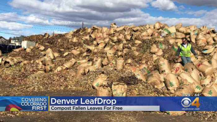 Denver Offers Leaf Drops To Help Prevent Clogged Gutters