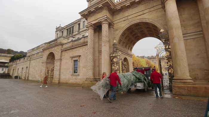 Christmas trees arrive at Chatsworth House