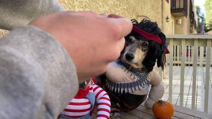 Dogs Dress Up as Famous Movie Characters for Halloween