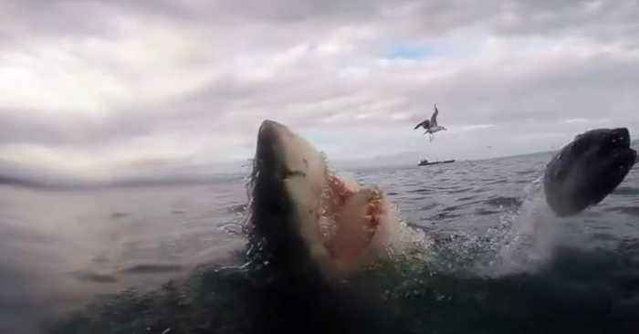 This Man Nearly Lost His Hand Trying To Film A Great White Shark In South Africa