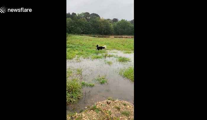 No floods will stop these dogs from play day in the UK