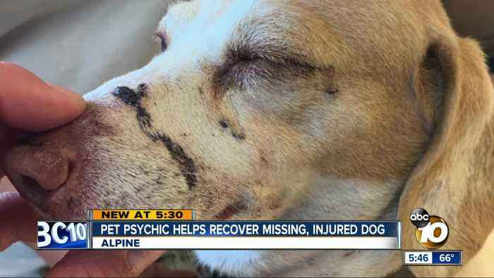 Pet psychic helps recover missing, injured dog in Alpine