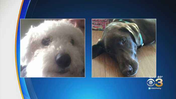 Animal Cruelty Investigation Underway Following Death Of Two Dogs In Gloucester County