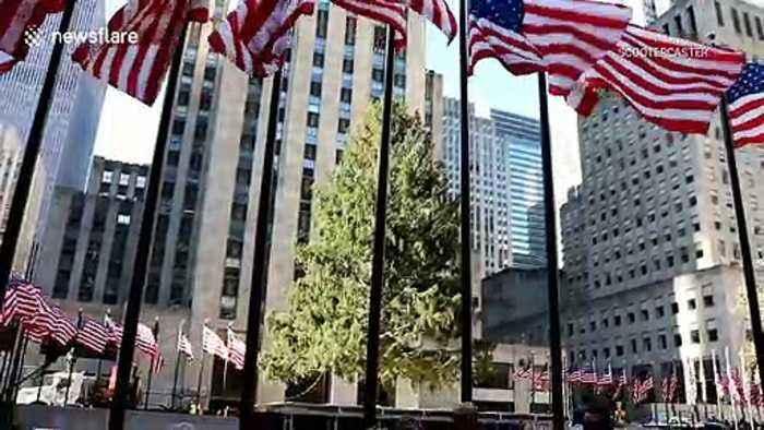 Iconic 2019 Rockefeller Christmas tree arrives in New York City